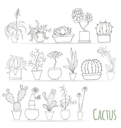 Set of cactus in pots Isolated on white background vector image