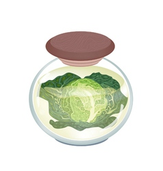 A Jar of Delicious Pickled Savoy Cabbage vector image