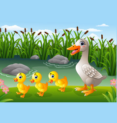 Cartoon duck family vector