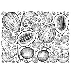 Hand drawn background of monk fruit and etrog vector