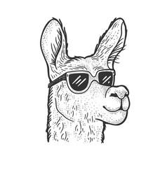llama in sunglasses sketch vector image