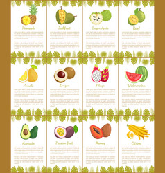 Pomelo and longan posters vector
