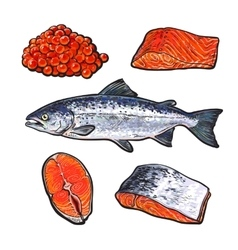 Sea fish salmon with caviar and fillets vector
