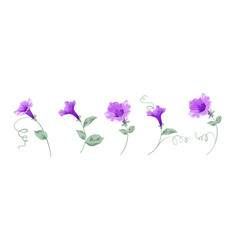 set different bindweed flowers on white vector image