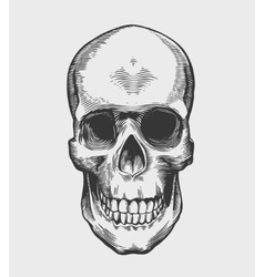 Skull in vintage engraving style vector image