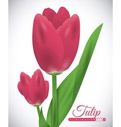 Tulip flower vector