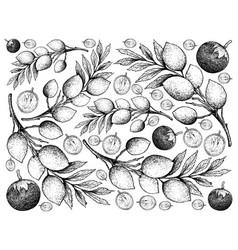 Hand drawn background of star apple and elaeocarpu vector