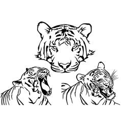 Tiger Tattoo Drawings vector image