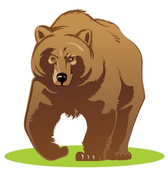 a bear vector image