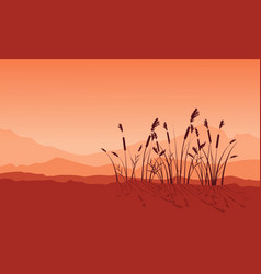 Beauty landscape of coarse grass silhouettes vector