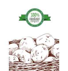 Hand drawn sketch of potatoes in a basket eco vector