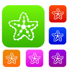 starfish set collection vector image