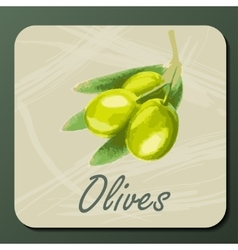 green olive on a branch vector image
