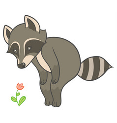 cartoon raccoon looks at flower vector image