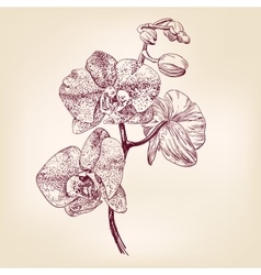 floral orchid hand drawn illustration vector image