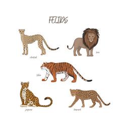 Set cartoon cute felids vector
