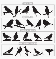 birds breeds silhouettes vector image