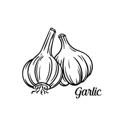 Hand drawn garlic icon vector image