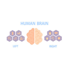 Human brain divide into left and right vector
