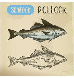 pollock fish side view sketch vector image
