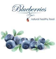 blueberries vector image vector image