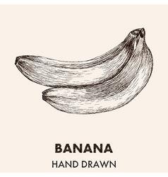 Sketch banana Hand drawn Fruit collection vector image vector image