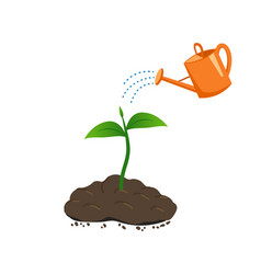 Watering the young plant growing in the ground vector