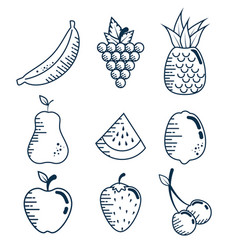set fresh fruits handmade drawn vector image vector image