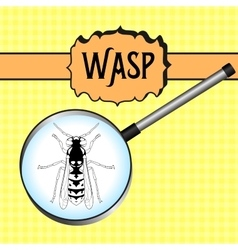 insect in magnifierWasp Sketch of Wasp Wasp vector image
