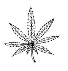 Doodle cannabis leaf hand drawn vector
