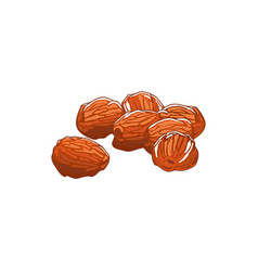Dried date fruits isolated sugared food sketch vector
