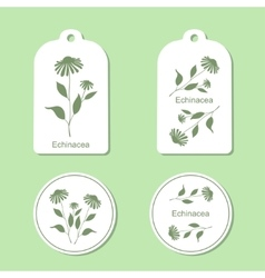 Echinacea leaves and flowers vector image
