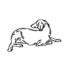 Hand drawn lying persian vector