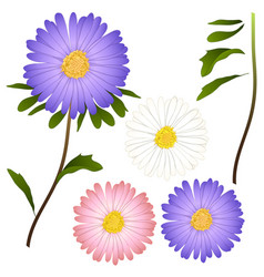 Purple pink and white aster flower isolated on vector