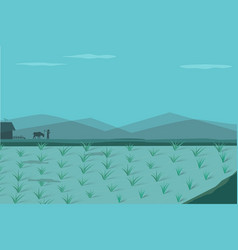 Rice field in morning vector