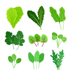 Set different types leaves for salad vector
