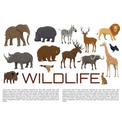 wildlife poster wild animals vector image
