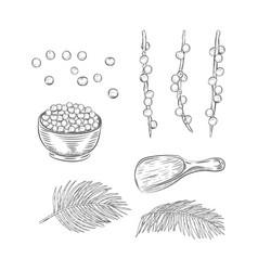 Acai berries botanical elements set vector