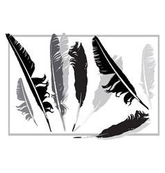 Black and grey feathers vector