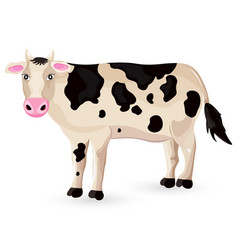 Cow isolated on white cartoon character vector