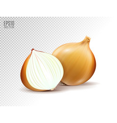 Fresh onion with half on a transparent vector