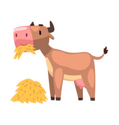 Funny brown cow eating hay farm animal cartoon vector