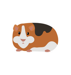 Guinea pig cavia porcellus isolated cartoon animal vector