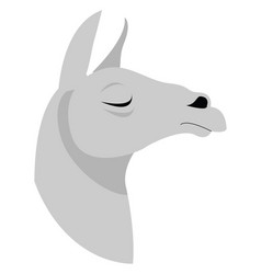 Lama on white background vector