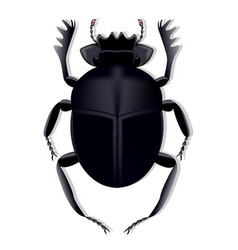 scarab beetle created using a mesh gradient on a vector image