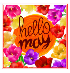 hello may hand lettering with tulip flower vector image