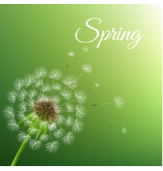 dandelion and spring background vector image vector image