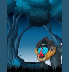 a mandrill in dark forest vector image