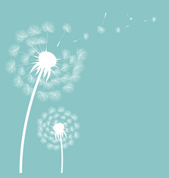 dandelion postcard vector image