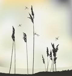Dragonflys Landscape view Reeds vector